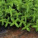 Alaska_plants_small