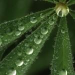 Droplets1_copysmall