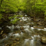 Smokies_Stream_small