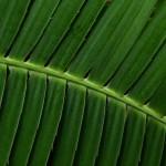 fern_small