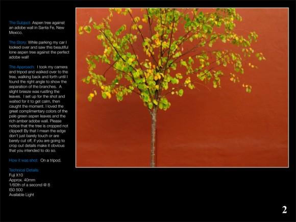 vision & technique - tree on orange background