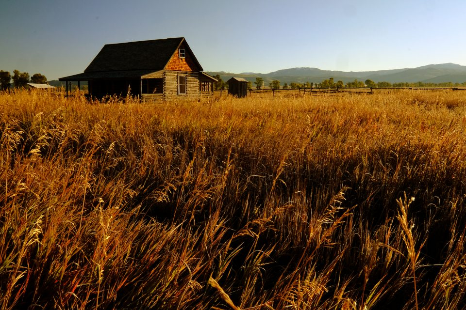 Cabin and wheat